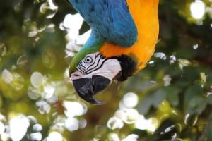 Centro Urku guacamayo al revés licencia CCO Pixabay