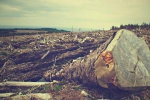Deforestación Centro Urku foto CCO