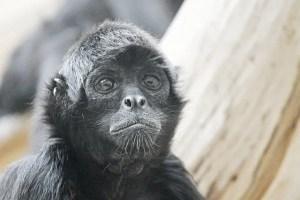 Mono araña Centro Urku CCO