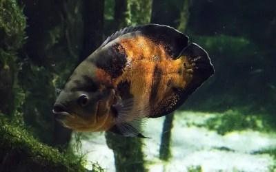 Primer acuario ecológico del Perú