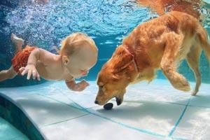 golpe de calor en mascotas