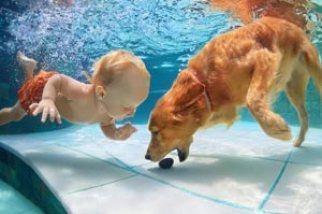 perro-nadando