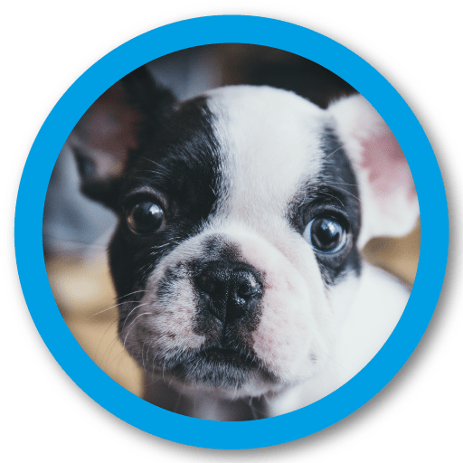 veterinaria-granada