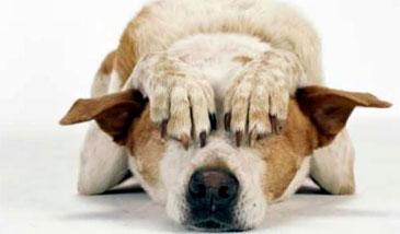 comportamiento-perro-asustado
