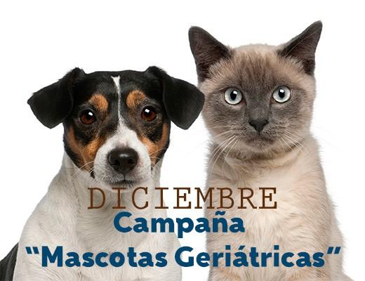 mascotas-geriatricas
