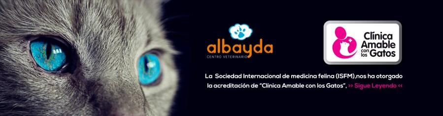 clinica amable con los gatos
