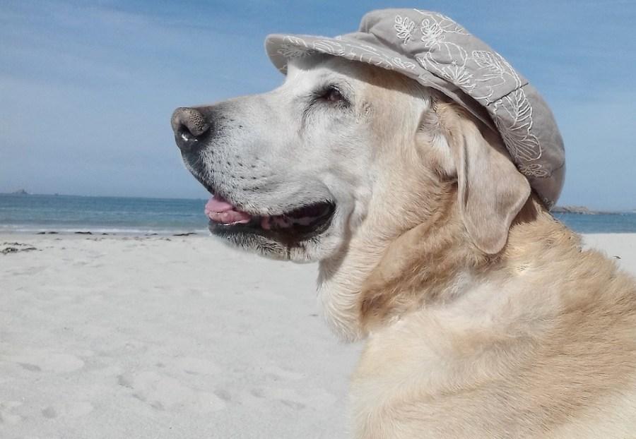 playas-para-perros