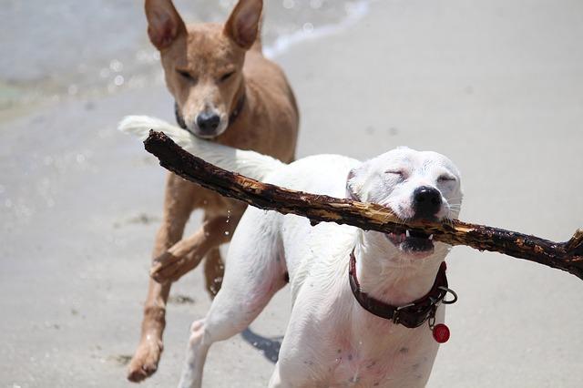 playa perros