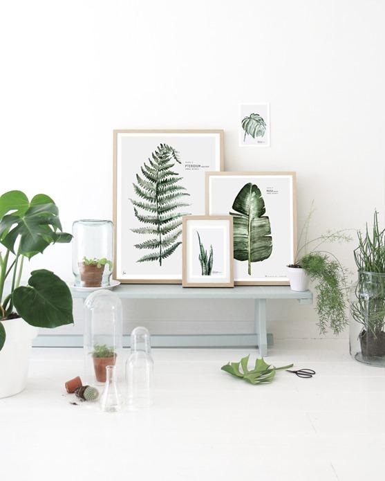 framed fern art prints