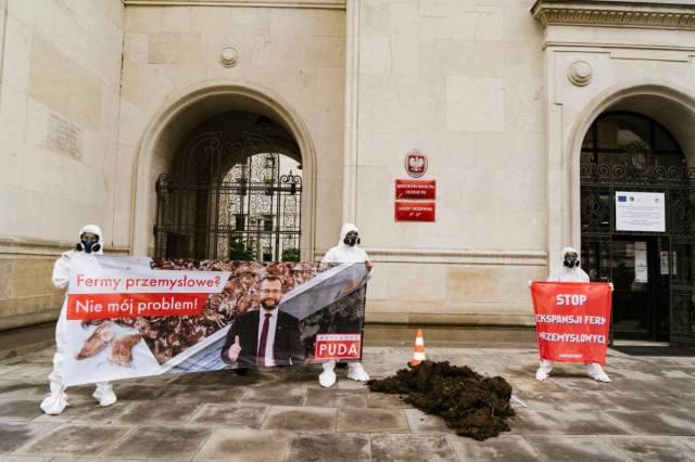 fermy przemysłowe, greenpeace polska, kurze odchody