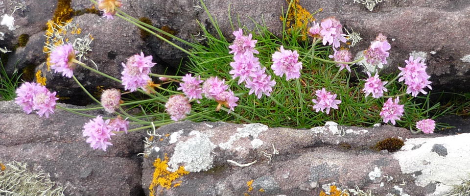 The rare and beautiful Flora of Badachro and Gairloch