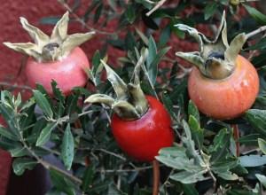 ceramic rosehips