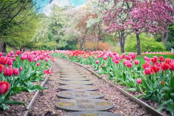 Giardini con fiori colorati: come si progettano cereagricola romana 80
