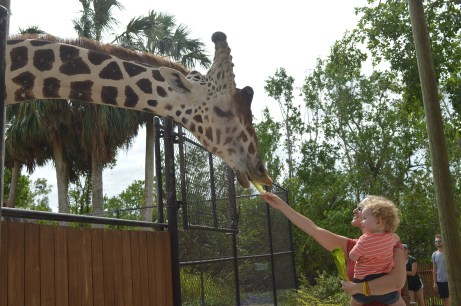 Feeding the Giraffes at the Naples Zoo