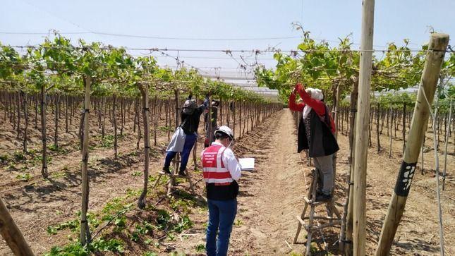 Establecen las condiciones mínimas de trabajo en el sector agrario