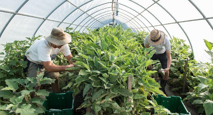 Los desafíos de la agricultura y la silvicultura para que sean actividades más seguras