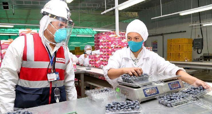 SUNAFIL adapta sus normas de inspección laboral a la crisis sanitaria