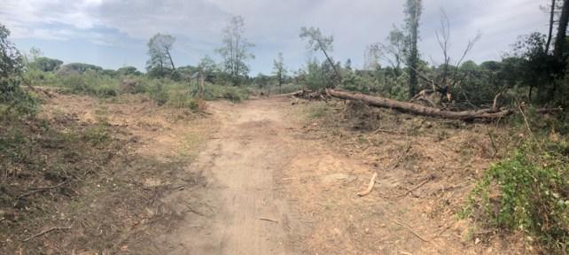 La pineta un mese dopo il tornado