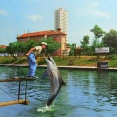 Il delfino Lalla, la star di Cesenatico