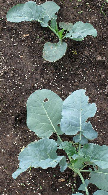 Plant A Fall Garden North Carolina Cooperative Extension