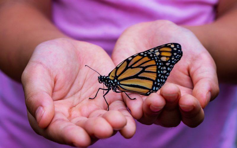 Monarch butterflies_Feb Events