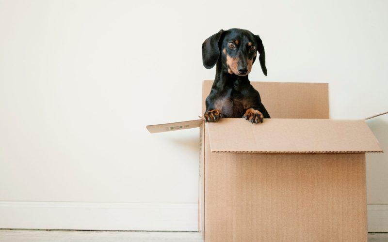doggie in box