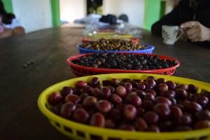 CESPPO Comercio Justo El Salvador (43)