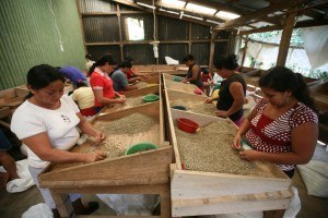 APECAFE is a certified Fairtrade second-level cooperative based in El Salvador.