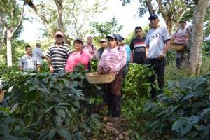 Coop. EL Jabali Comercio Justo El Salvador (127)