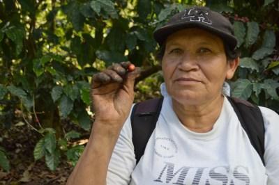 Coop. EL Jabali Comercio Justo El Salvador (214)