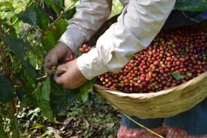 Coop. EL Jabali Comercio Justo El Salvador (37)