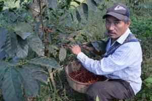 Coop. EL Jabali Comercio Justo El Salvador (56)