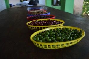 Coop. EL Jabali Comercio Justo El Salvador (8)