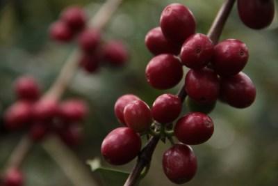 CLAC Comercio Justo Fairtrade Latam (236)