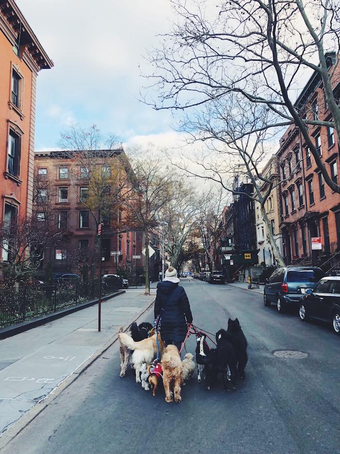 New York City dogwalker