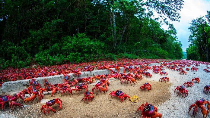 Christmas Adası, Avustralya  Dünyanın En Renkli 10 Yeri Christmas Adas   Avustralya