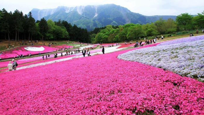 Hitsujiyama Park, Japonya  Dünyanın En Renkli 10 Yeri Hitsujiyama Park Japonya