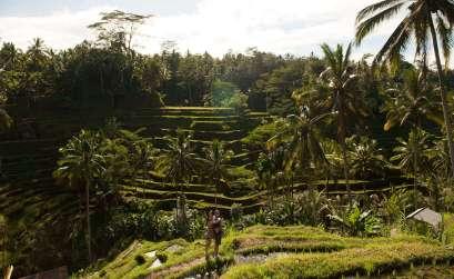 bali adası nerede Endonezya'nın Bali Adası Nerede? Bali Prin Tarlas 3