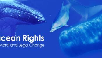 Cetacean rights
