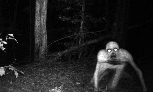 Criatura Assustadora em Pântano da Louisiana