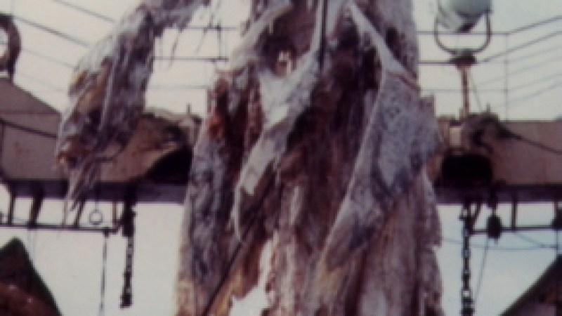 Monstro do Lago Ness Capturado?