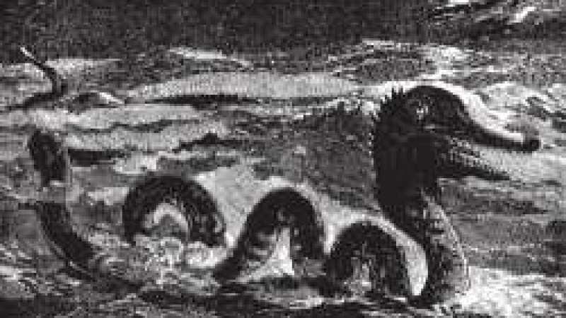 A Grande Serpente Marinha (1892)