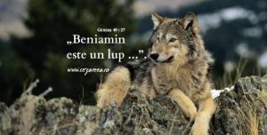 Geneza 49.27, Beniamin este un lup
