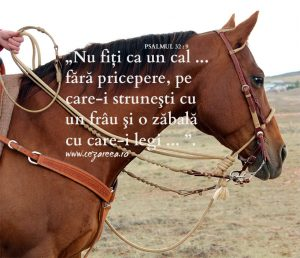 Proverbe 29.18, Frâul