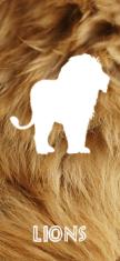 Lion Link