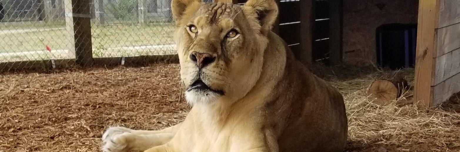 Kola - Central Florida Animal Reserve