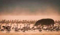 La mia Wildlife, Marco Urso - 05