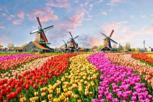 离开荷兰后才发现:鬼地方,我是那么的想念你 Netherlands flowers  首页 Netherlands flowers