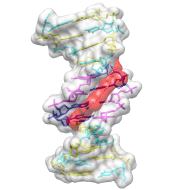 UCSF Chimera - DNA / Netropsin