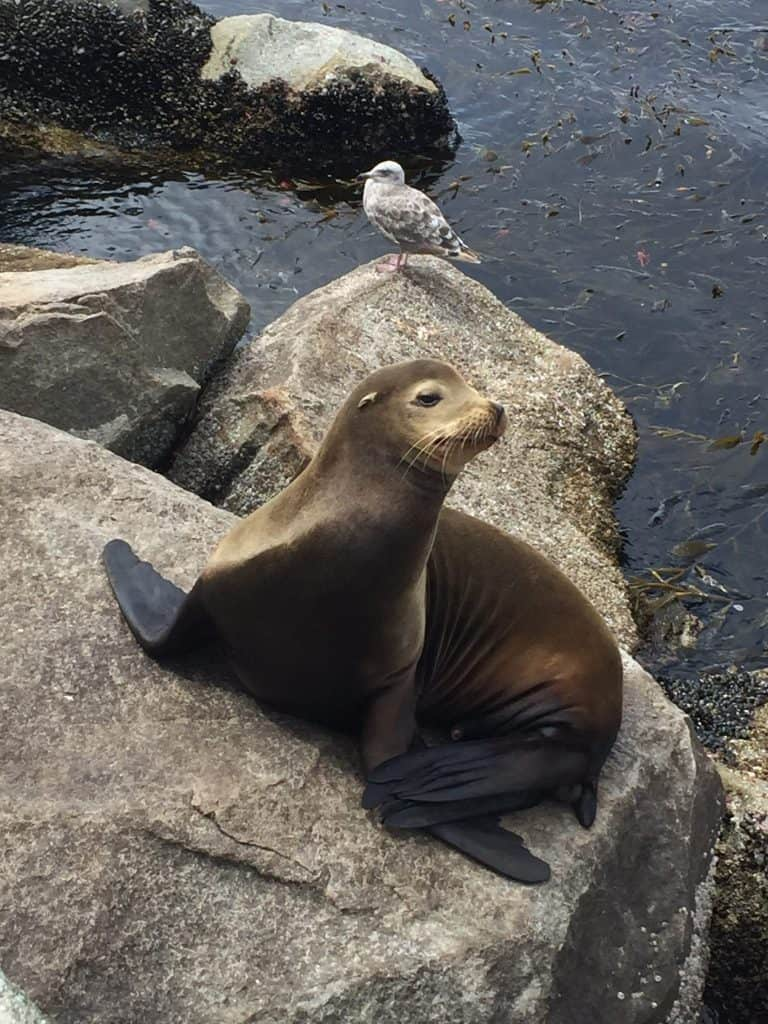monterey bay aquarium nearby sea lion